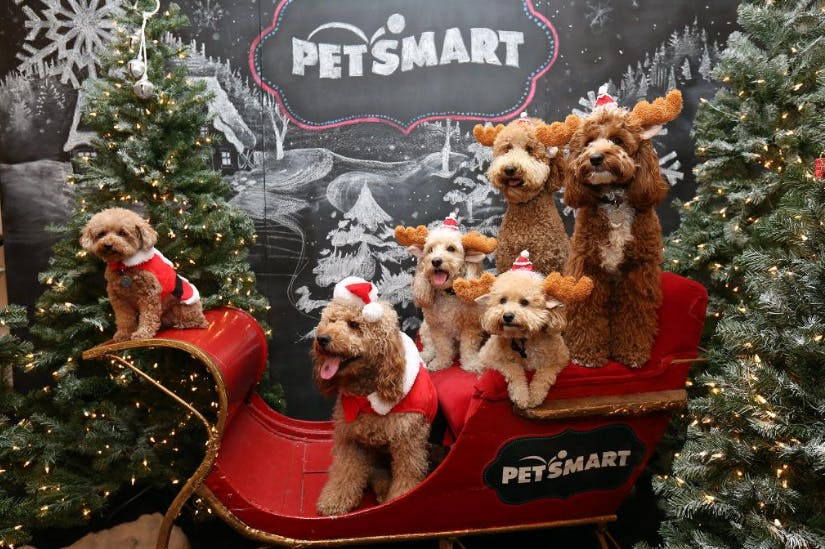 Petsmart Christmas Hours 2020 26 PetSmart Hacks You Won't Want to Shop Without!   The Krazy